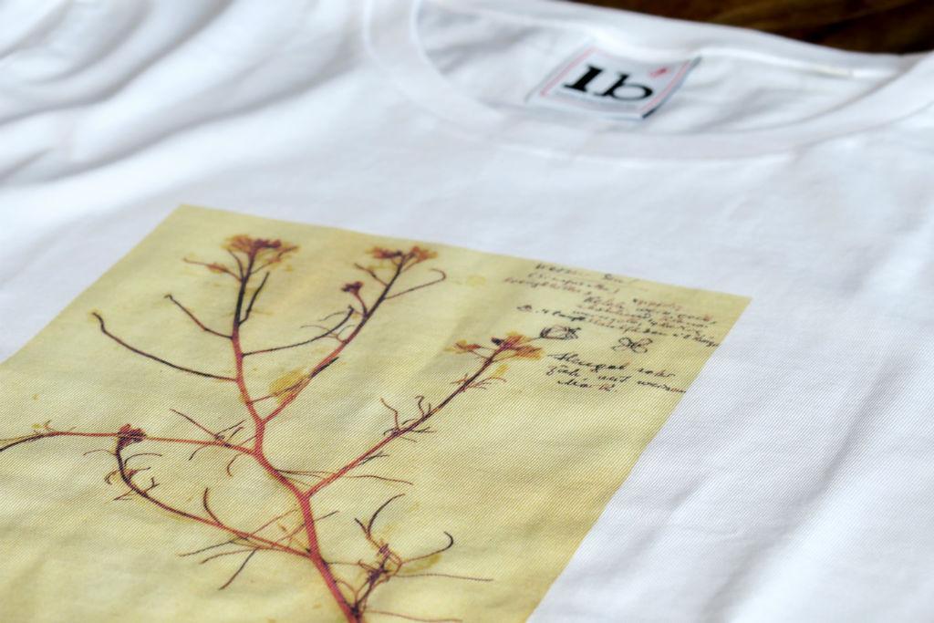 Shirt Rosa Luxemburg Senf Herbarium